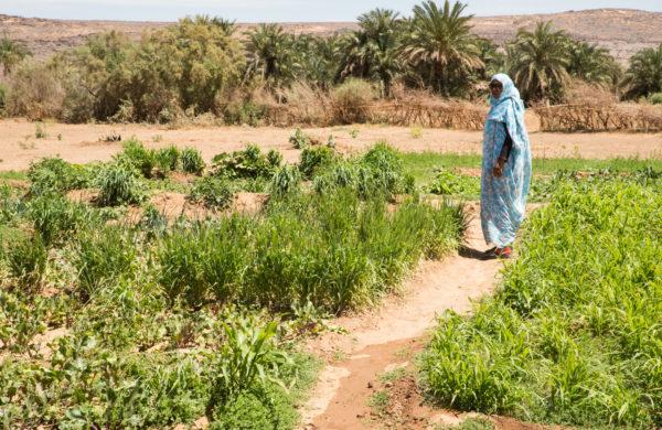 Œuvrer à la création d'un village de référence à Maaden (Mauritanie)
