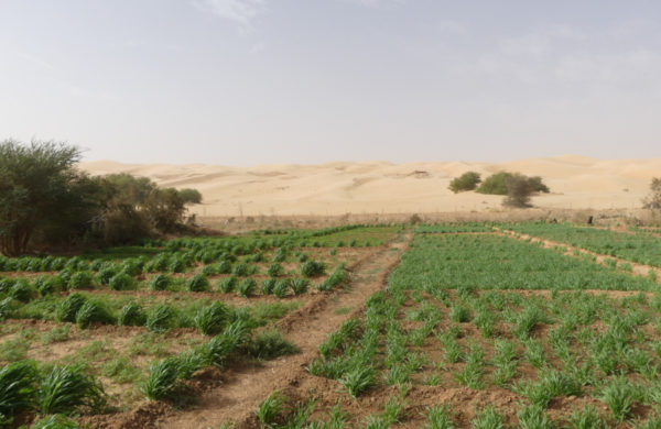 Village with integral ecology (Maaden, Mauritania)