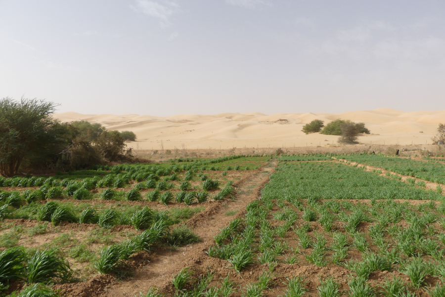 <b>Village with integral ecology (Maaden, Mauritania)