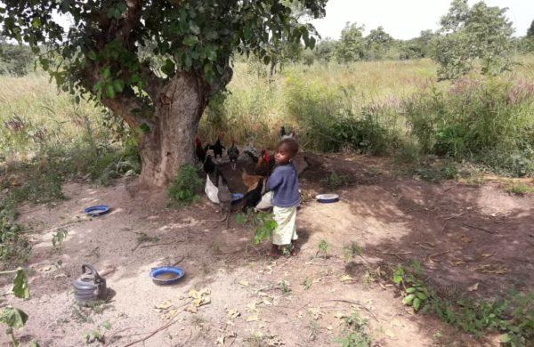 Participer à la création d'une ferme agroécologique à Tiélé (Mali)