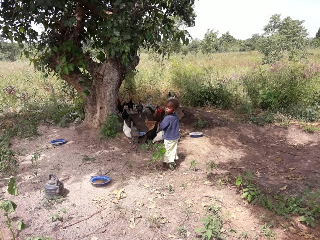 <b>Agroecologic farm in Tiélé (Mali)