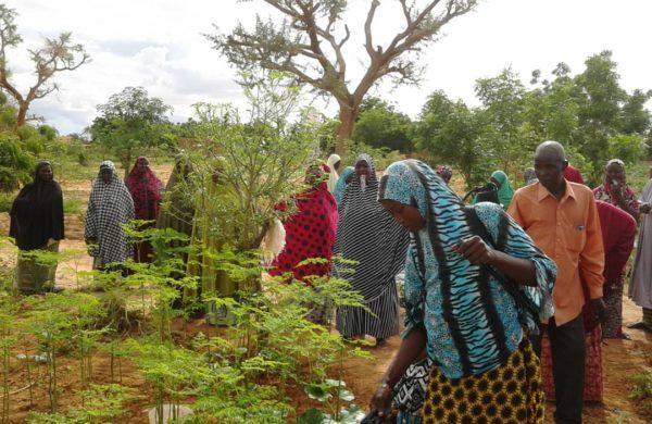 Adesaf   – Association pour le Développement Economique et Social en Afrique